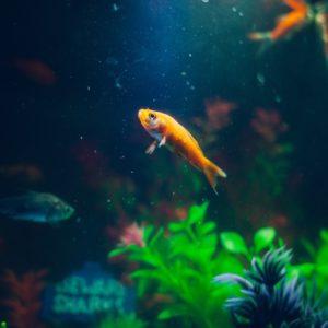 Jak przetransportować akwarium?