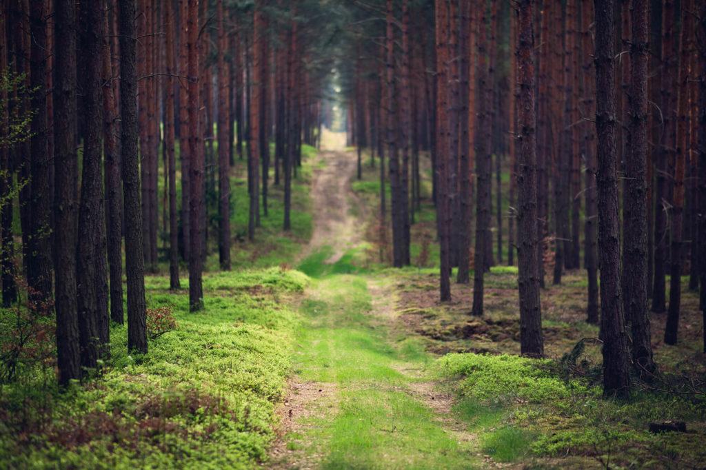 Leszno trasa rowerowa