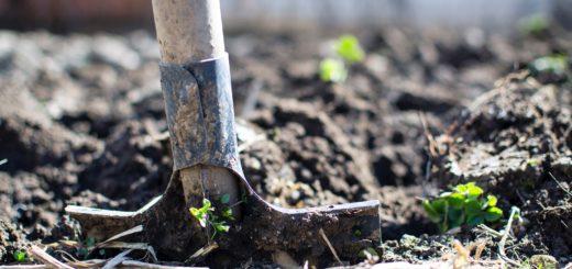 jak zorganizować transport sadzonek