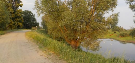 ulubiona trasa rowerowa warta