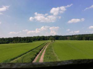 ścieżka rowerowa lichynia