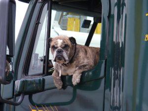 transport psa za granicę